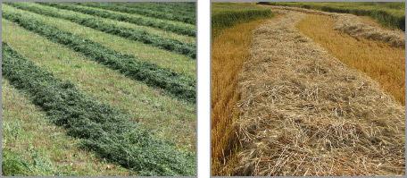 Grass-forage-crops